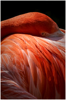 PaulaStankovich_Flamingo Eye