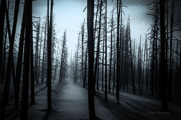 00200 90 Ravaged by Forest Fire