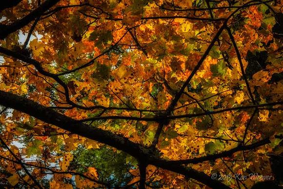 KLW_3792 Blue Ridge Parkway Autumn