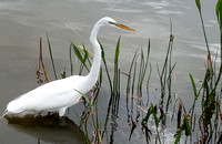 Nancy Weintraub Egret