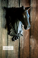 SharonPacker_HorseKnocker